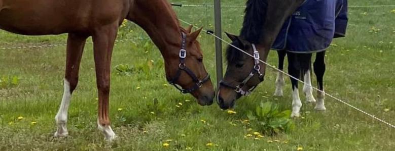 Paardenrevalidatie.Eenvoudig?